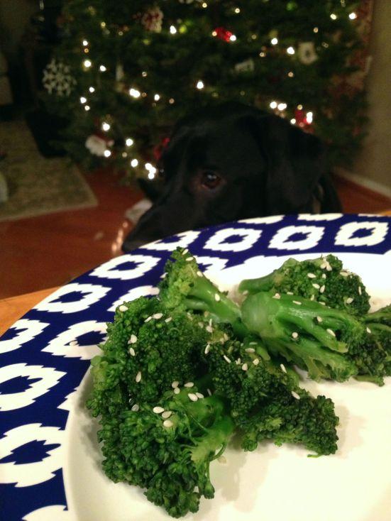 broccoli pup