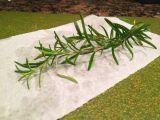 Herbs the Word {Lemon Rosemary Red PepperChicken}